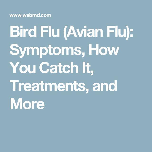 Bird Flu (Avian Flu): Symptoms, How You Catch It, Treatments, and More