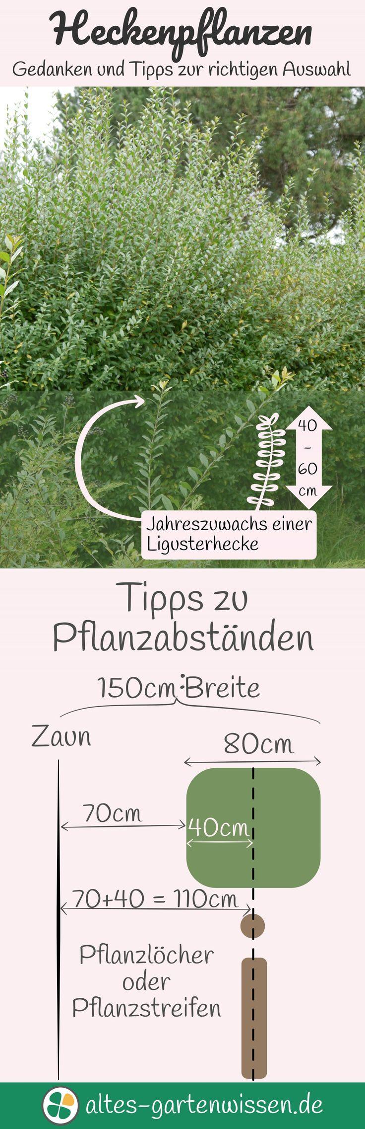 731 best Garten images on Pinterest | Home and garden, Plants and Garden