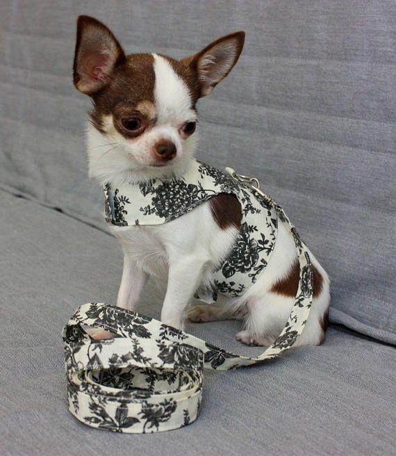 Dog Harness Set Harness Leash Set Matching Leash Pet Xs Dog