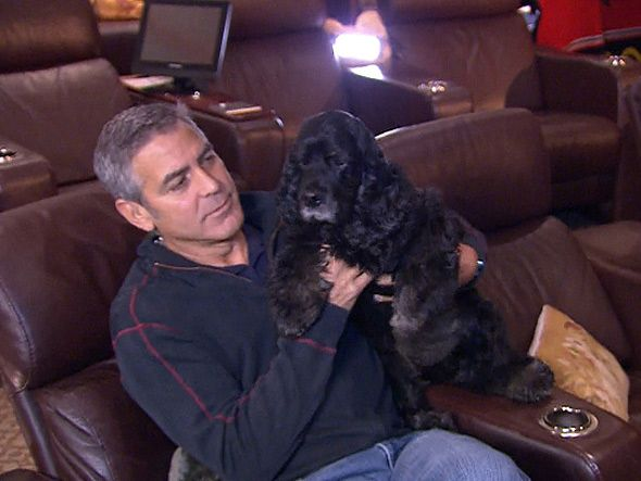 George Clooney & his adopted dog, Einstein.Einstein, George Clooney, Rescue Dogs, Celebrities Pets, Celebrities Dogs, Celebrities Cocker, Celebrities And Their Pets, Cocker Spaniels Dogs, Animal