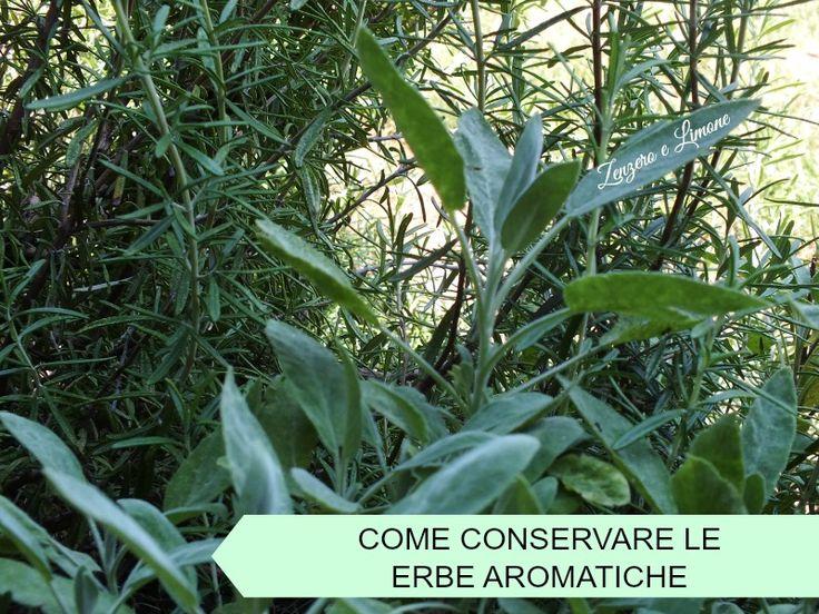 Come+conservare+le+erbe+aromatiche