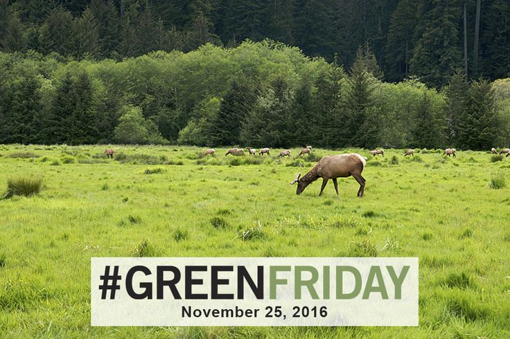 Prairie Creek Redwoods State Park offers sandy beaches and open meadows grazed by magnificent herds of Roosevelt elk. Ferns line canyon walls. Lush stands of the world's tallest living tree species, the coast redwood, stand in primeval majesty. Get your FREE #GreenFriday pass today: https://www.eventbrite.com/e/green-friday-nov-25-2016-prairie-creek-redwoods-state-park-registration-29227382889 #CAStateParks