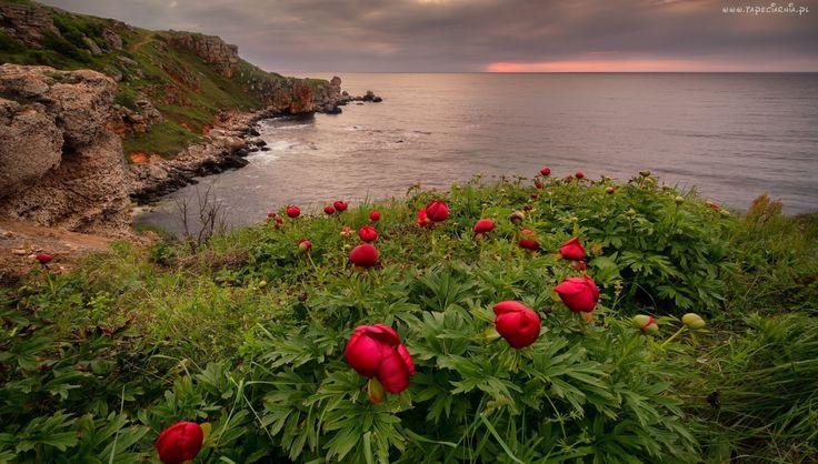 Morze, Skały, Kwiaty, Wybrzeże