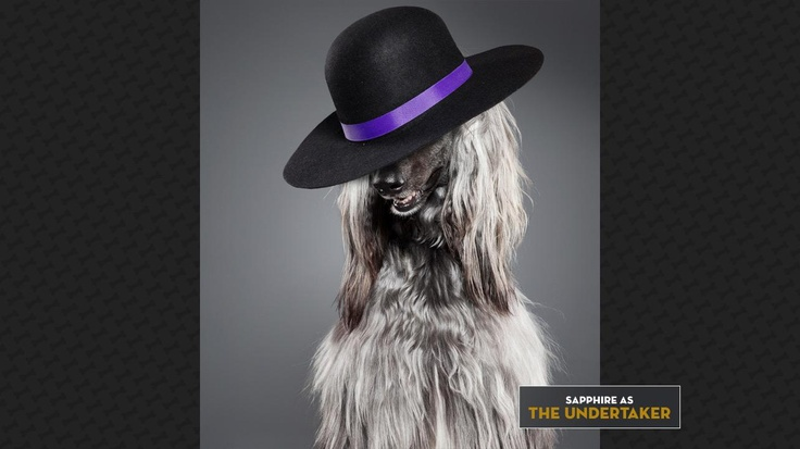 Sapphire as The Undertaker: REST IN POOCH!  Check out more: http://wwe.me/lkyaE