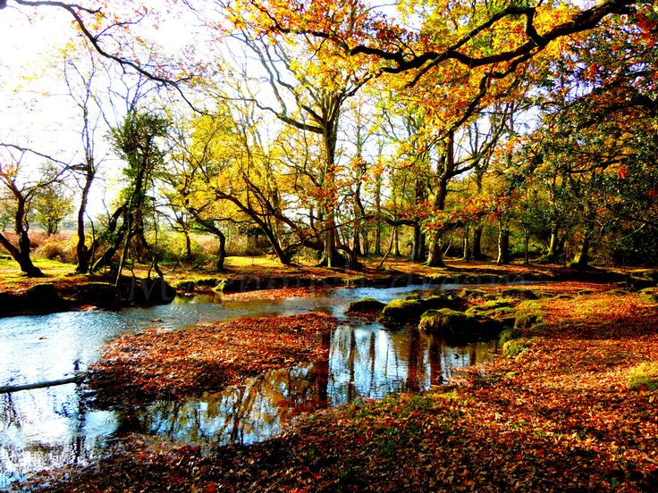 New forest - Hampshire - England
