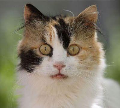 cat scan for kidney stones