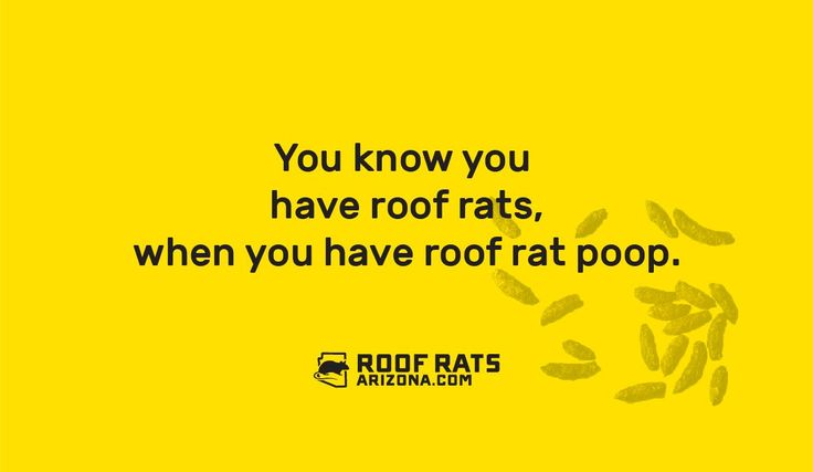 You know you have roof rats, when you have roof rat poop
