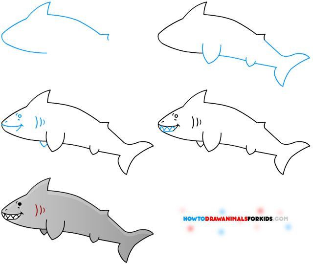 How to Draw A Shark for Kids from How to Draw Animals for Kids