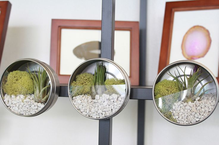How to Make Magnetic Terrariums   - Darby Smart