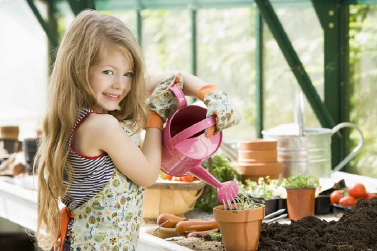 Уход за комнатными растениями зимой. Как ухаживать за комнатными растениями правильно