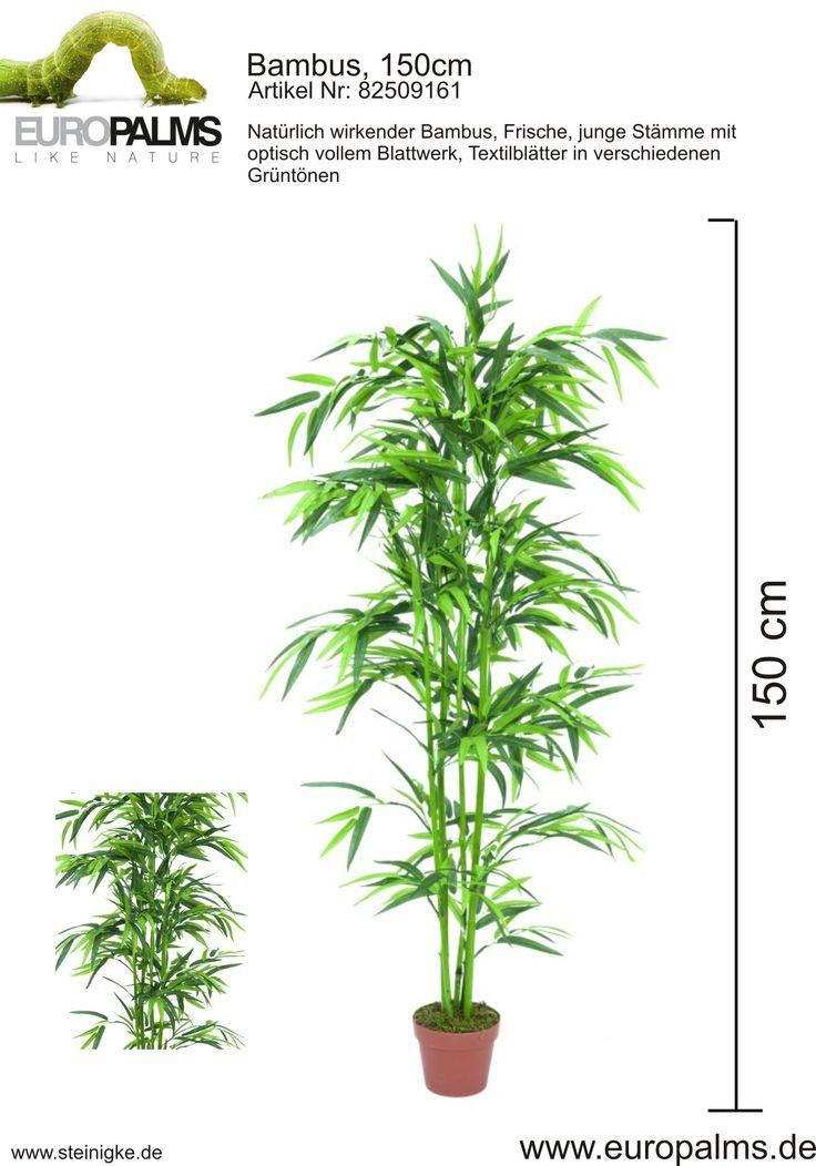Europalms 82509161 Bambus, 150cm - europalms - steinigke