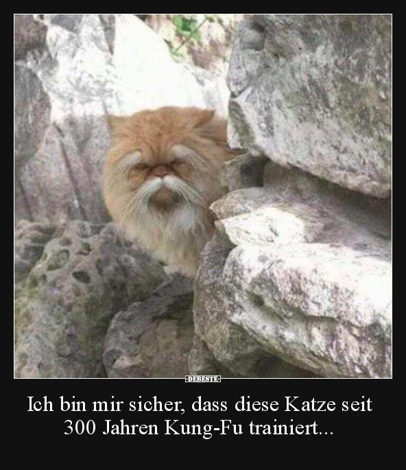 Ich bin mir sicher, dass es diese Katze schon seit 300 Jahren gibt.   – Animals