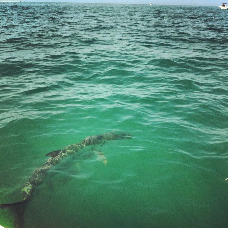 28 best fishing on little gasparilla island images on for Saltwater fishing basics