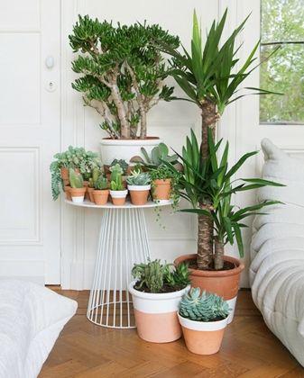 Accumulation de plantes