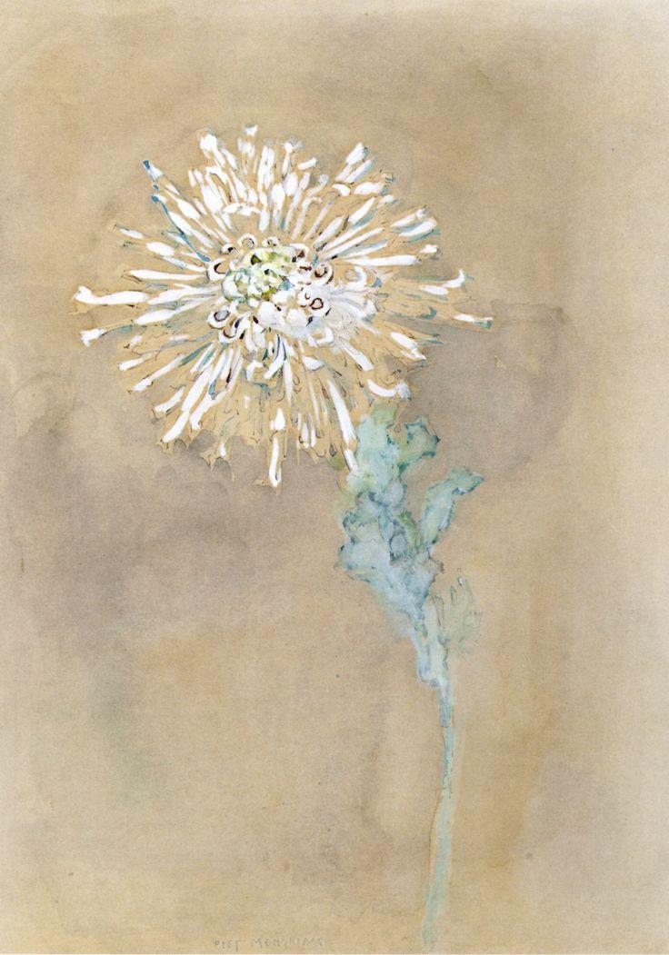 """lonequixote: """" Chrysanthemum ~ Piet Mondrian """""""