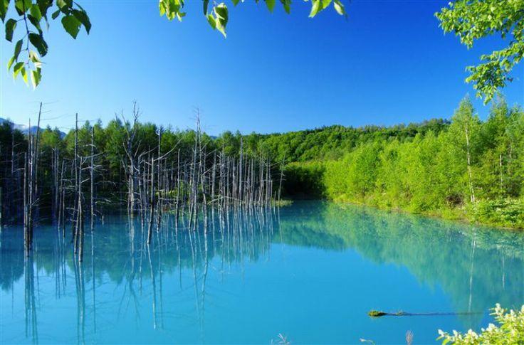 """神秘的なコバルトブルーの世界。PCの壁紙にも起用された""""北海道 美瑛の青い池""""   by.S"""