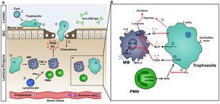 PLOS Pathogens: Host Immune Response to Intestinal Amebiasis