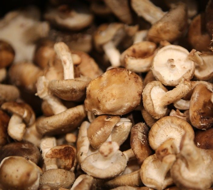 "Drying mushrooms is an easy way to ""upcycle"" your produce. While most foods lose flavor or texture after dehydration, mushrooms improve."