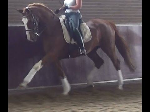 www.sporthorses-online.com 2002 Intermediaire gelding for sale