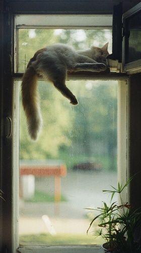 kitty | http://cutepetcollectionsfrancisco.blogspot.com