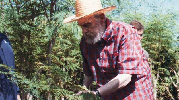 """Moringa el """"árbol milagroso"""" como le llamó Fidel , una pequeña planta capaz de curar enfermedades, y con propiedades capaz de vencer la desnutritición."""
