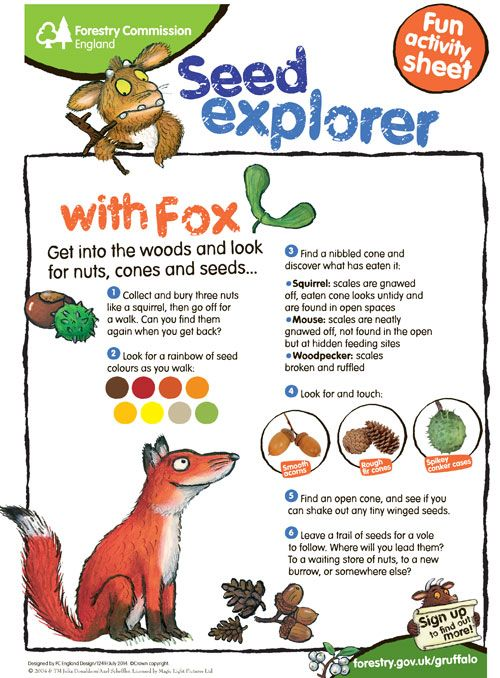 Get your little adventurers discovering nuts, seeds & wildlife this half term! Download our free autumn activites sheet http://www.forestry.gov.uk/pdf/seed_explorer_activity_sheet.pdf/$FILE/seed_explorer_activity_sheet.pdf