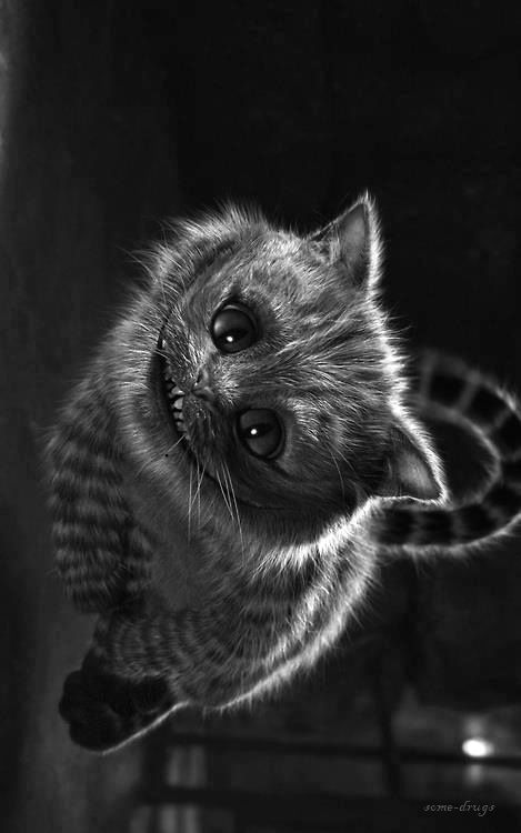 Chesire. #cat #wonderland