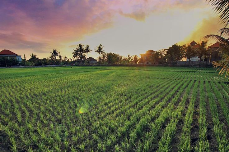 Views from the Ganesha Inn in Ubud | From $14/night for a double room | Hotels In Bali Indonesia | via @Just1WayTicket