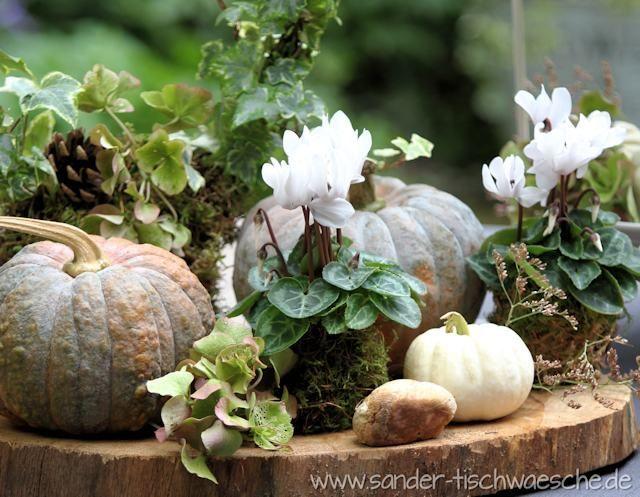 Dekorieren Im Herbst Alpenveilchen In 2020 Decor Fall Decor Garden Containers