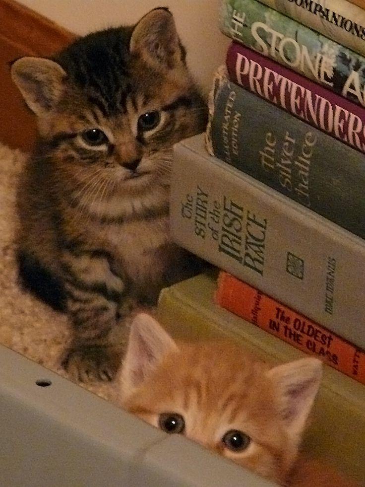 Book kitties.. ♥