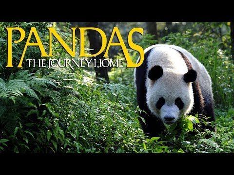 29 Incredible Nature Documentaries for Kids