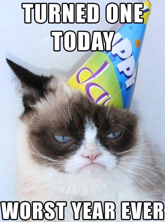 Grumpy+Cat+Birthday | Grumpy Cat Birthday