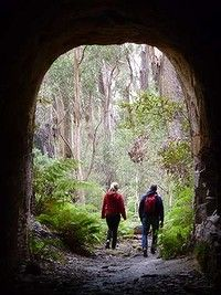 Great Bushwalk with kids - near Wombeyan Caves and Mittagong Emerging from the Box Vale tunnel
