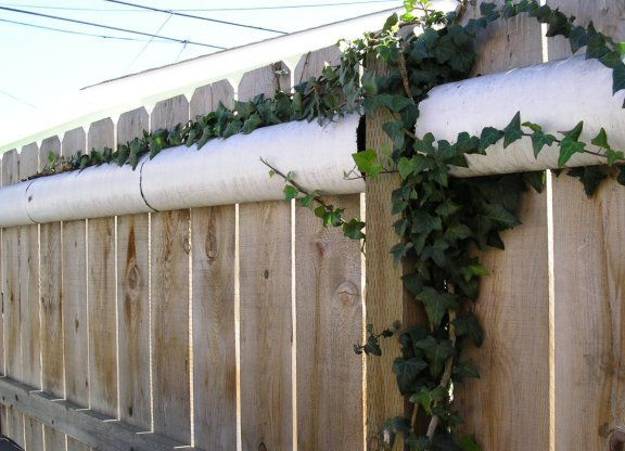 The 25 Best Cat Fence Ideas On Pinterest Dog Jumping