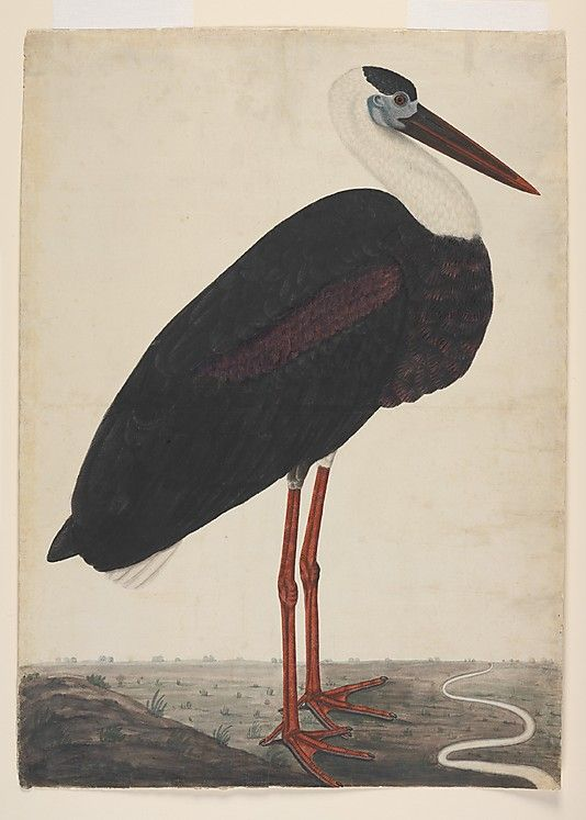 Black Stork in a Landscape (India, probably Lucknow) - watercolour, c. 1780