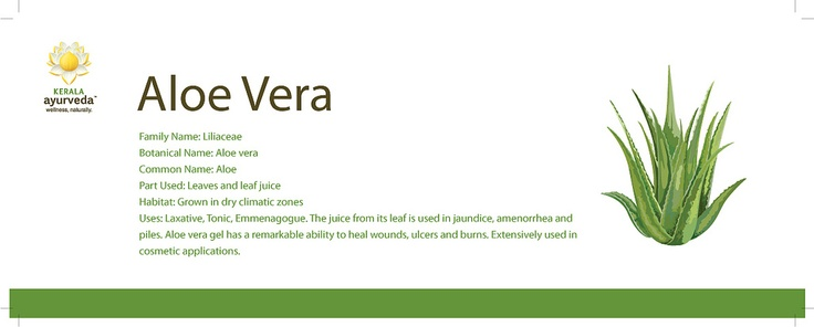 ayurvedic benefits of alovera, ayurvedic education