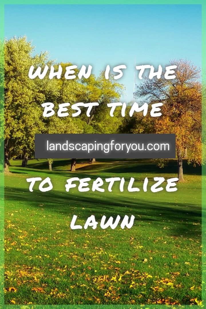 Best Place To Find Perfect Lawn Overseeding Lawn When To Fertilize