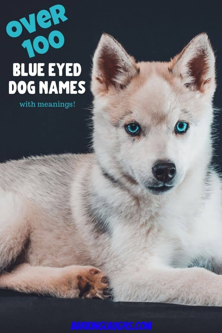 Over 90 Of The Most Hypnotic Blue Eyed Dog Names In 2020 Blue Eyed Dog Names Dog Names Blue Eyed Dog