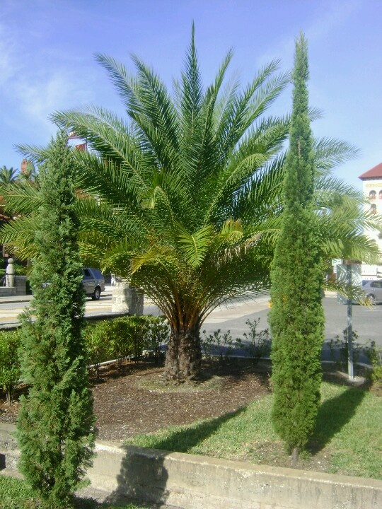 Tags: Palm Gardens Nursing Home Clearwater Florida, Palm Gardens Nursing  Home Fl, Palm Gardens Nursing Home Florida ...