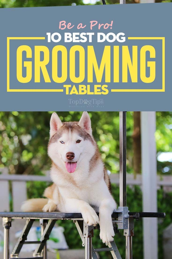 The Best Dog Grooming Tables For Home Dog Grooming Dog Groomers Dog Grooming Diy