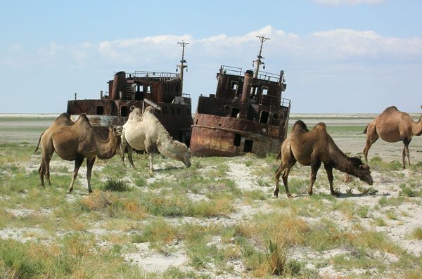 Dried up Aral sea shipwrecks with camels.