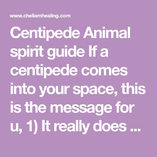 Centipede Animal spirit guide If a centipede comes into your space