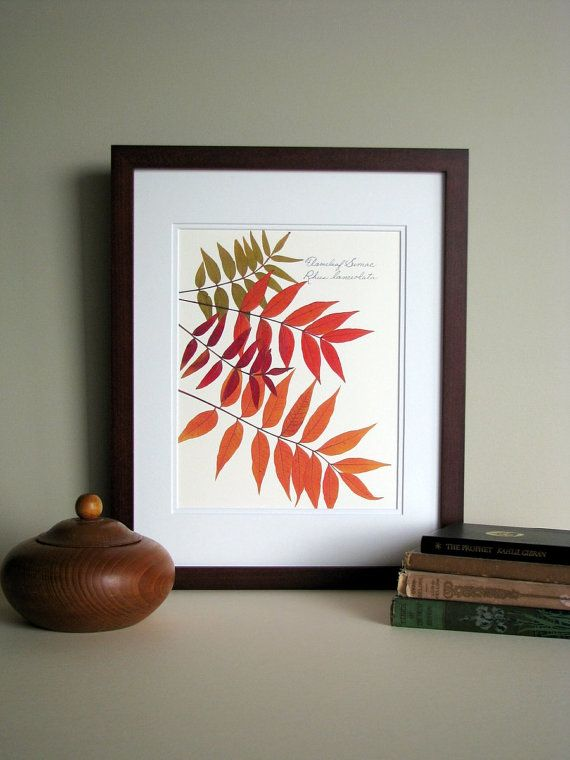 Pressed leaves print, 11x14 double matted, Flame leaf Sumac leaves, wall decor no. 0062