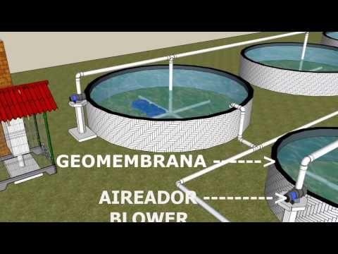 Unidad intensiva para piscicultura con estanques de for Produccion de peces en estanques