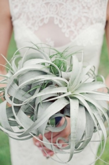 air plant wedding bouquet