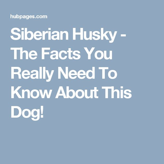 Siberian Husky - The Facts You Really Need To Know About This Dog!