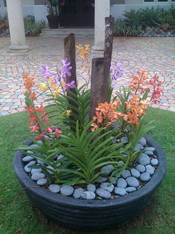 Les 6208 meilleures images du tableau jardin plantes for Entretien plantes jardin