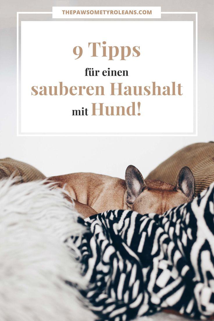 Sauberer Haushalt mit Hund, Hygiene und Hunde in der Wohnung, Tipps und Tricks für den Hunde Alltag, Leben mit Hund, Hundeblogger Österreich, Hunderatgeber, www.thepawsometyroleans.com