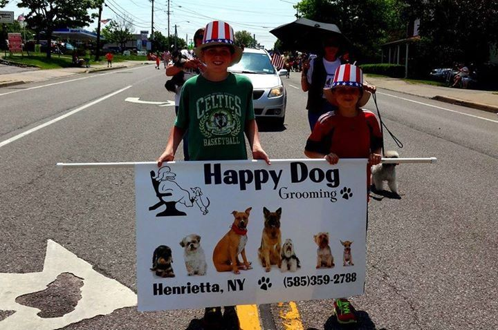 Dog Grooming Rochester Ny Mobile