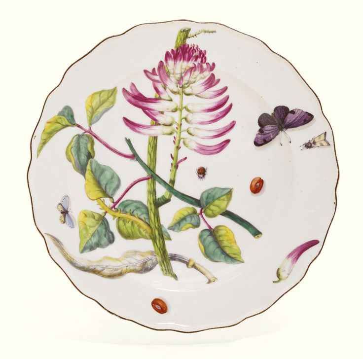 A Chelsea `Hans Sloane' botanical plate, circa 1755, painted with a red flower of the labernum family with narrow blade shaped blooms, surrounded by insects, red anchor mark above numeral 34.